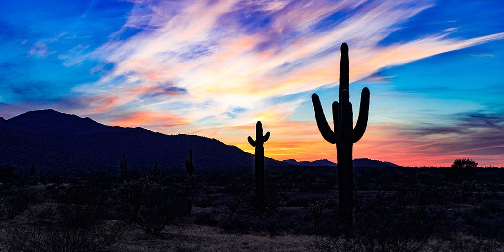 Cacti in front of a beautiful sunset.