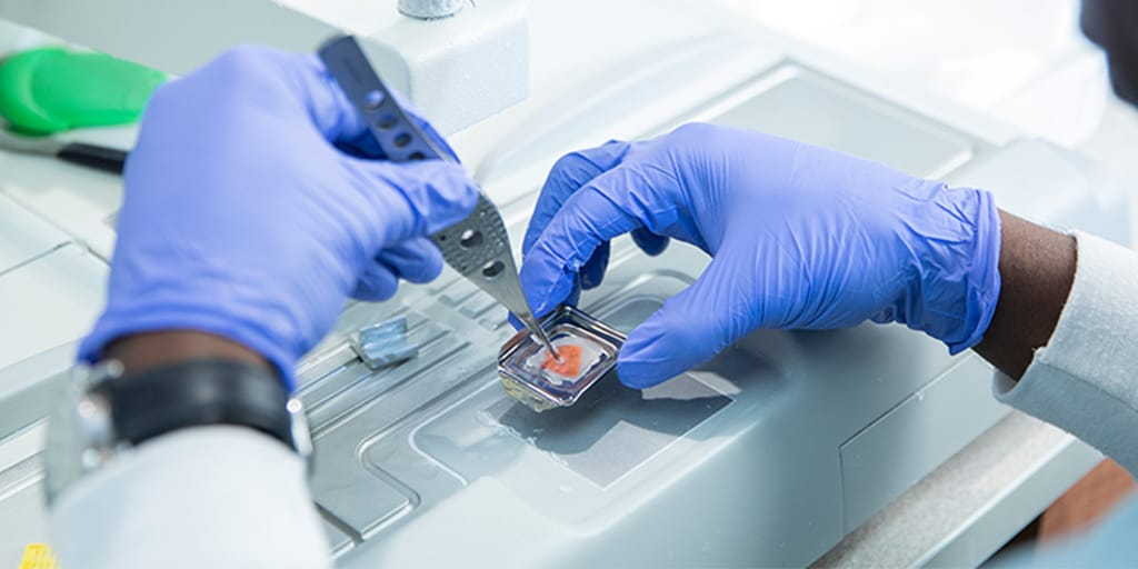A close up of a histology technician's hands as they prepare a microscope slide with tissue sample