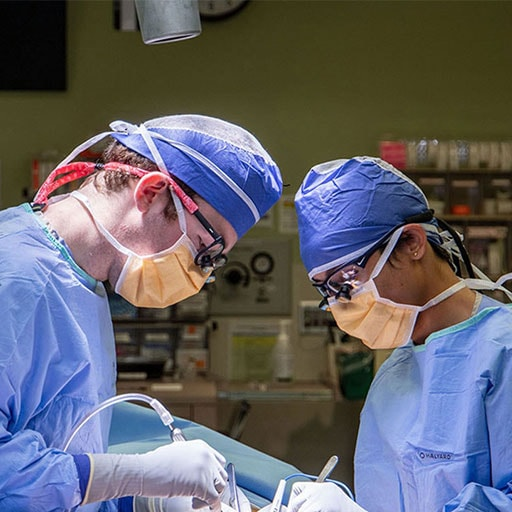 A vascular surgery procedure at Mayo Clinic in Rochester, MN